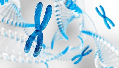 Microscopic image of 3-D X chromosome against the background of DNA and other X chromosomes.