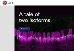 Cover of eLIFE: A Tale of Two Isoforms