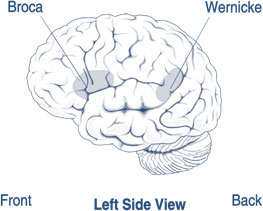 Illustration of the brain's left side