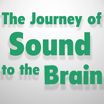 An animated video illustrating how sounds travel from the ear to the brain, where they are interpreted and understood.